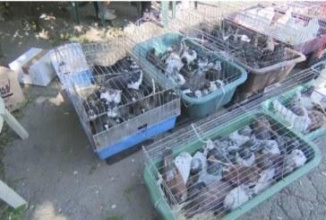 Проверяват пазарите заради африканската чума: Търговци изоставиха стоката си