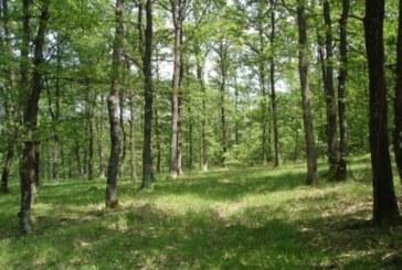 Над 9300 проверки в горите на територията на ЮЗДП за първото полугодие