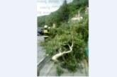 Страшна буря се изви над Дупница и Сапарева баня, прекърши 20-г. дърво