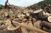 Дървата за огрев няма да поскъпват