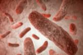 Опасна супербактерия взима все повече човешки жертви