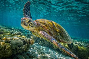 Туристи раниха защитен вид морски костенурки в Гърция