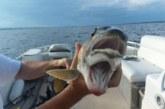 Жена хвана странна риба с две усти