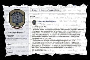 Паника в Разложко след заблуждаващо съобщение на кметство Баня за задължително клане на прасетата