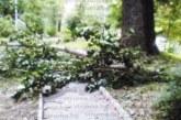 НА КОСЪМ! Стара топола се стовари пред семейства, дошли на пикник в парка на Невестино, минути по-рано под дървото се веселили младежи