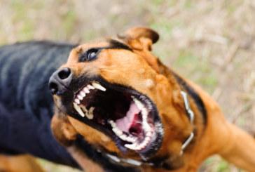"""Агресивно куче нахапа жестоко участничка от """"Игри на волята"""""""