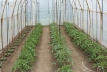След 25 години безплатно ползване на минералната вода собствениците на оранжерии в санданско село Левуново вече ще плащат