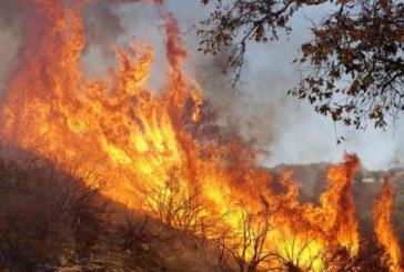 Пожари унищожиха 80 дка гори в Пернишко