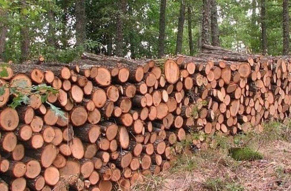 Ограничение за издаване на разрешителни за добив на дърва за огрев разбуни разложани: Цените от склад са двойно по-високи, не можем да си ги позволим, а зимата чука на вратата