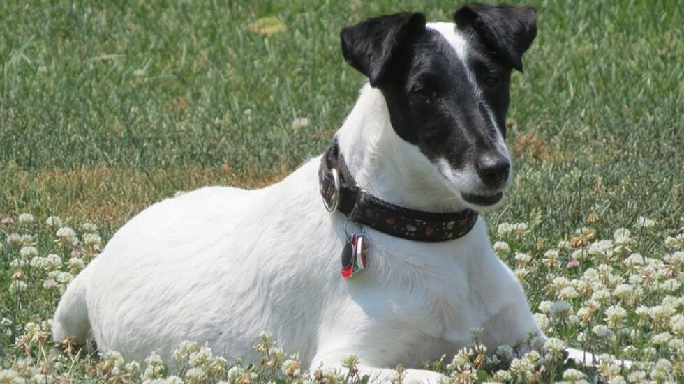 Изгубено куче се събра със стопанката си след 12 години