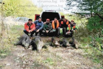 ДОБРА СЛУКА! С 6 изстрела млад ловец повали 5 прасета