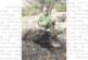 Сандански ловци отстреляха за два дни 2 прасета, 3 вълка и 2 лисици