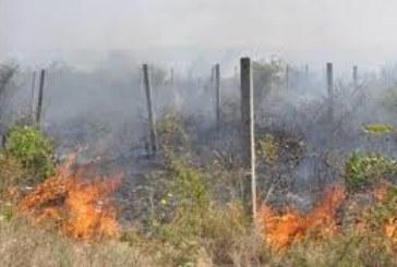 Огнен ужас! Лозя горяха в благоевградско село