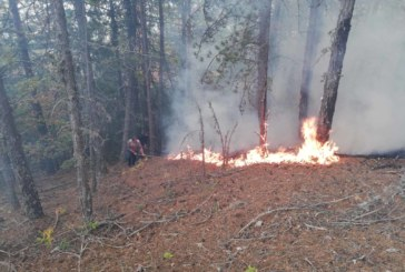 """Пожарът в района на """"ДГС Елешница"""" се разраства"""