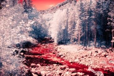 Кървава река потече заради клане на прасета