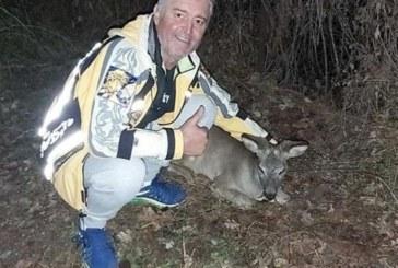 Мъж от Югозапада спаси малко еленче, нападнато от глутница кучета