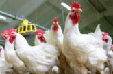 Първи случай на птичи грип във Великобритания