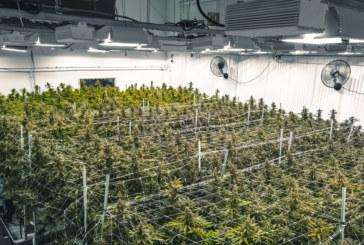 Вучич на съд заради афера с ферма за марихуана