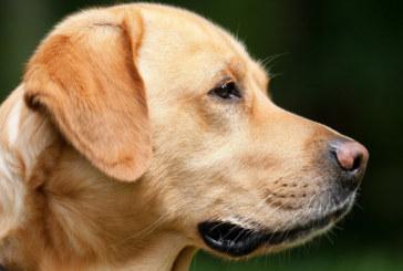Кучета нападнаха мъж в Благоевград