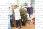 Младежи от Радомир подариха и украсиха елхи  на два пенсионерски клуба