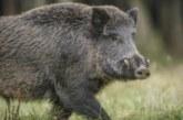 Удължават лова на глигани до 16 февруари
