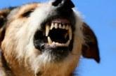 Бездомни кучета нахапаха две жени в Дупница