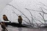 Мартенско време в следващите дни: дъжд, сняг, вятър и до 20 градуса