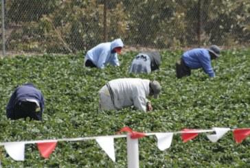 Работа в английски ферми – само с виза още от 2021 година