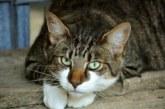 Търсят дом за най-злата котка на света