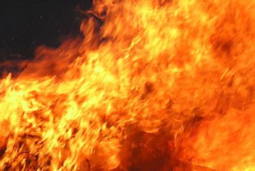 ОГНЕН УЖАС! 11 коне изгоряха при пожар във Врачанско