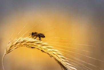 Обявиха пчелата за най-важното живо същество на планетата