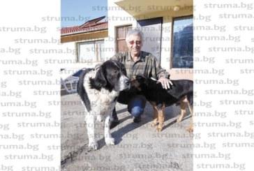 Осиновените от приют Захаринчо и Джентълмена спасиха екскмета на Дупница д-р П. Панайотов от обир, той ги възнагради с тлъсти пържоли