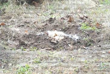 Вандали отрязаха липата на кюстендилски пенсионер, посипаха мястото със сол