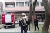 Спасиха сърничка, паднала в благоевградската река Бистрица