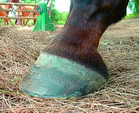Щракнаха белезници на благоевградчанин, измъчвал кон