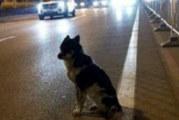 Куче чака от 80 дни убитата си в пътен инцидент стопанка точно на мястото на фаталната катастрофа