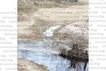 Първият щъркел кацна за 9-а поредна година посред зима в санданското село Струма
