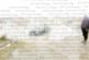 Зевзек от Марино поле потопи колата си в минерален извор на Рупите, вадят го с полиция