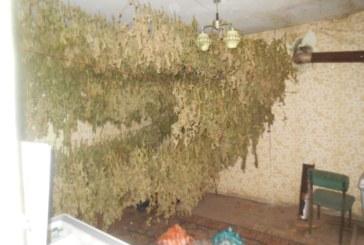Спипаха двама братя със 17 кг марихуана
