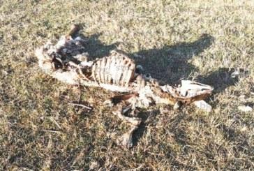 Притеснени жители на с. Стоб звънят в редакцията: Купища трупове на умрели животни се търкалят край р. Рилска, ще избухне епидемия!