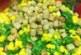 Зелена салата с царевица и кротони