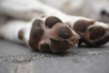 """Полицията разследва убийство на куче в дупнишкия кв. """"Бистрица"""""""