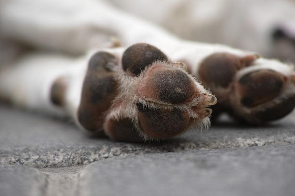Полицията разследва убийство на куче в дупнишкия кв.