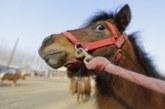Арестуваха двама младежи за кражба на кон в Петричко