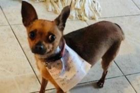 Стопанин под карантина изпрати кучето си до магазина
