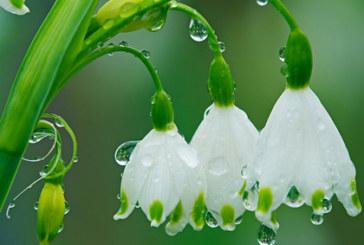 Дъждовна неделя, температурите падат