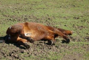 Задържаха петричанин, прострелял кон