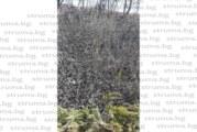 Пожар лумна в Ковачевци в първия ден от седмицата на гората