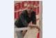 """Георги Ижбехов от Копривлен стана последното попълнение в отбора на Михаела Филева, ще се бори за приза в """"Гласът на България"""""""