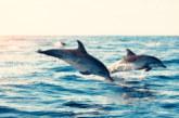 Морето изхвърли мъртви делфини край Созопол